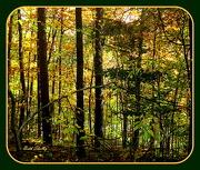 8th Oct 2012 - Woods