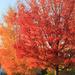 Orange + red = autumn. by rhoing