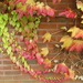 red, yellow and green leaves (word of the day) by quietpurplehaze