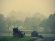 24th Oct 2012 - Misty