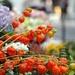 Florist by parisouailleurs