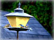 23rd Oct 2012 - Feed the Birds - Anyone know what type of bird the blue one is???