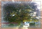 23rd Oct 2012 - copper autumn glory