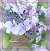 25th Oct 2012 - glorious tail end of hydrangea