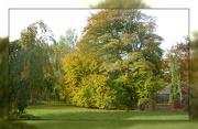 26th Oct 2012 - golden glow