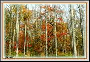 10th Oct 2012 - Fall Colors 2