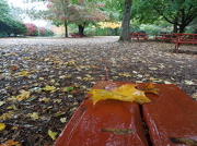 26th Oct 2012 - Picnics Have Ended