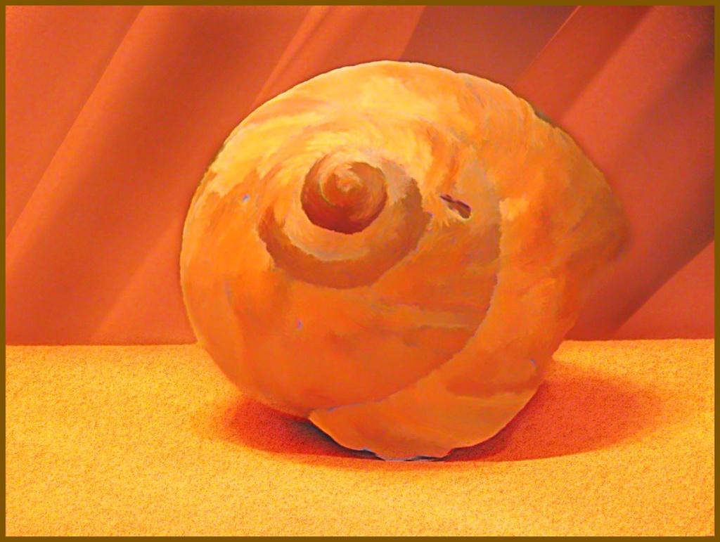 O'keeffe Seashell by olivetreeann