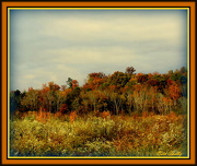 11th Oct 2012 - Season of Color