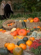 27th Oct 2012 - Autumn