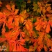 Autumn Leafs  by tonygig