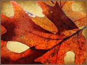 28th Oct 2012 - Leaves