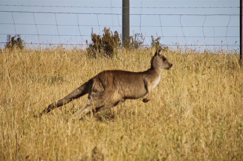 On The Run by purdey