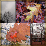 29th Oct 2012 - Big Storm, Big Leaves