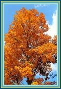 13th Oct 2012 - Hickory