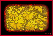 14th Oct 2012 - Abstract Flowers
