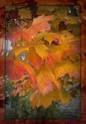 29th Oct 2012 - leaf layer