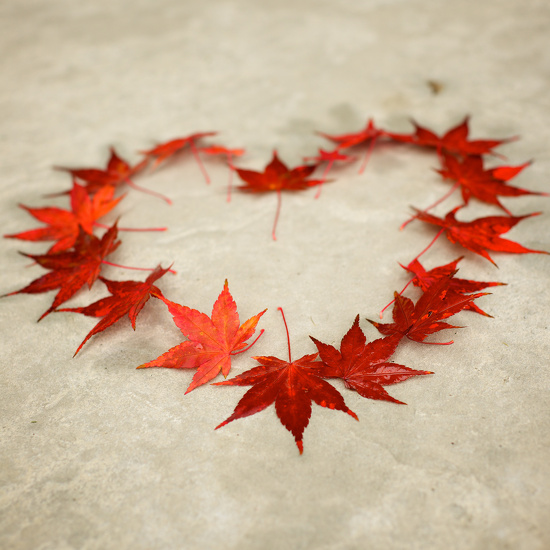 I HEART Fall!! by kwind