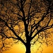 Yellow Sky & Tree by andycoleborn