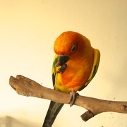 31st Oct 2012 - Orange/yellow - Either-or/Rainbow challenge