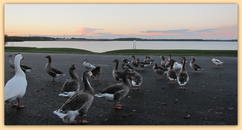 Sunset over Grafham water by busylady