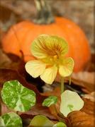 1st Nov 2012 - Very Late Bloomer