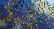 1st Nov 2012 - Autumn reflections