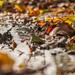 autumn by peadar