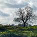 the tree by jantan