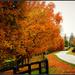 Follow the Orange Trees by cindymc
