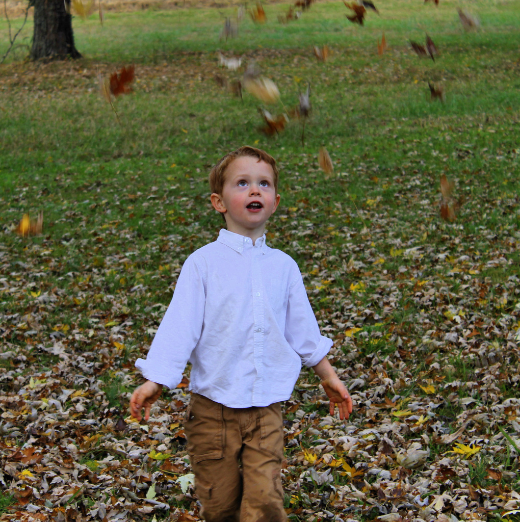 Playing in the leaves by cjwhite