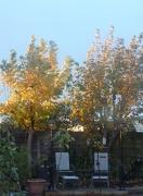 4th Nov 2012 - Sun on leaves