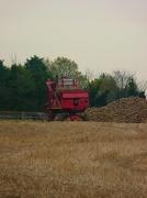 6th Nov 2012 - Beet Harvest