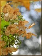 6th Nov 2012 - Autumn's Sepia Petals