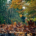 Blowing leaves by kwind