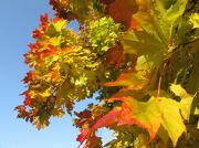 7th Nov 2012 - Autumn colours