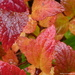 Foliage Aflame by calm