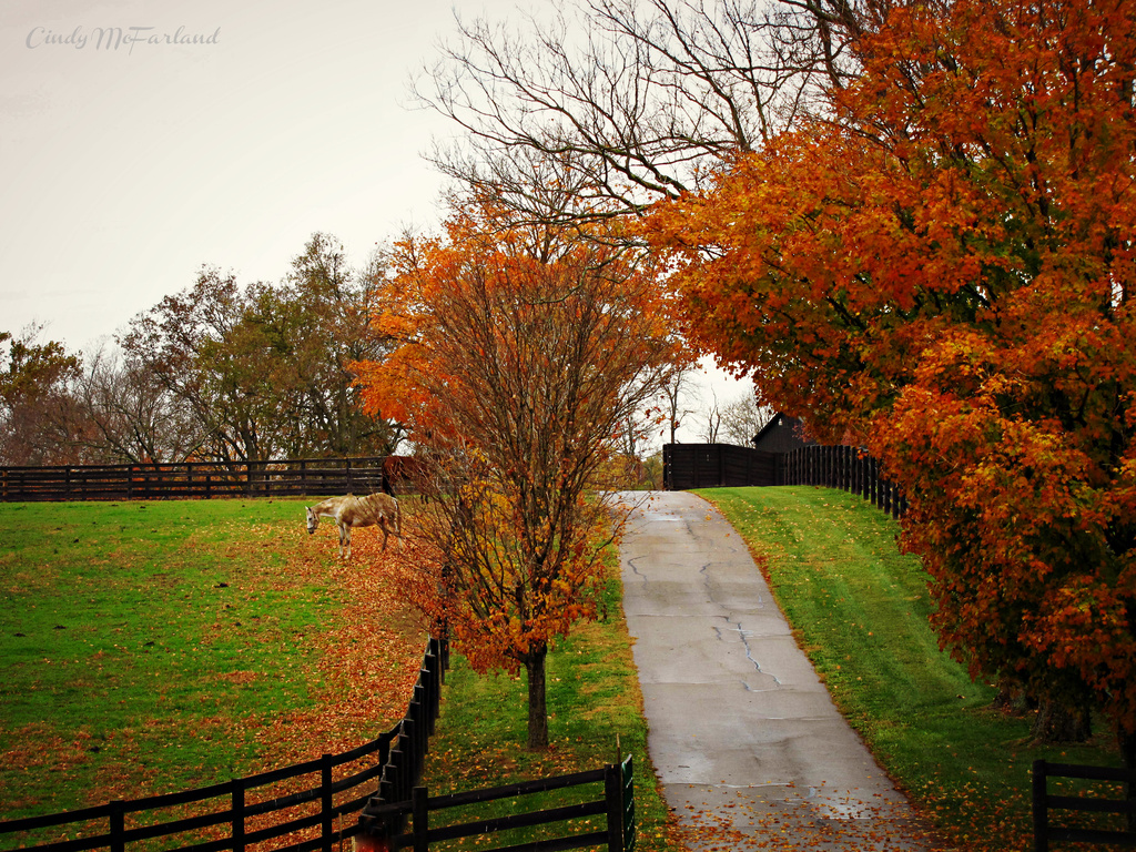 There's a farm on the other side.... by cindymc