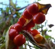 8th Nov 2012 - Bright Berries