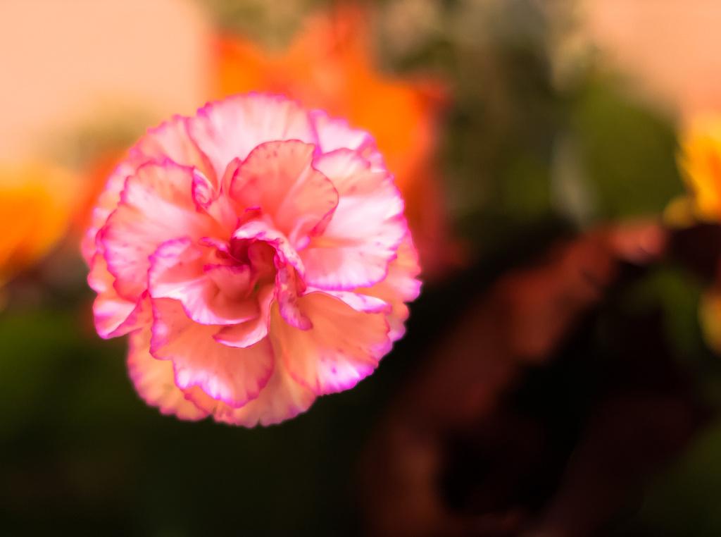 pink by peadar