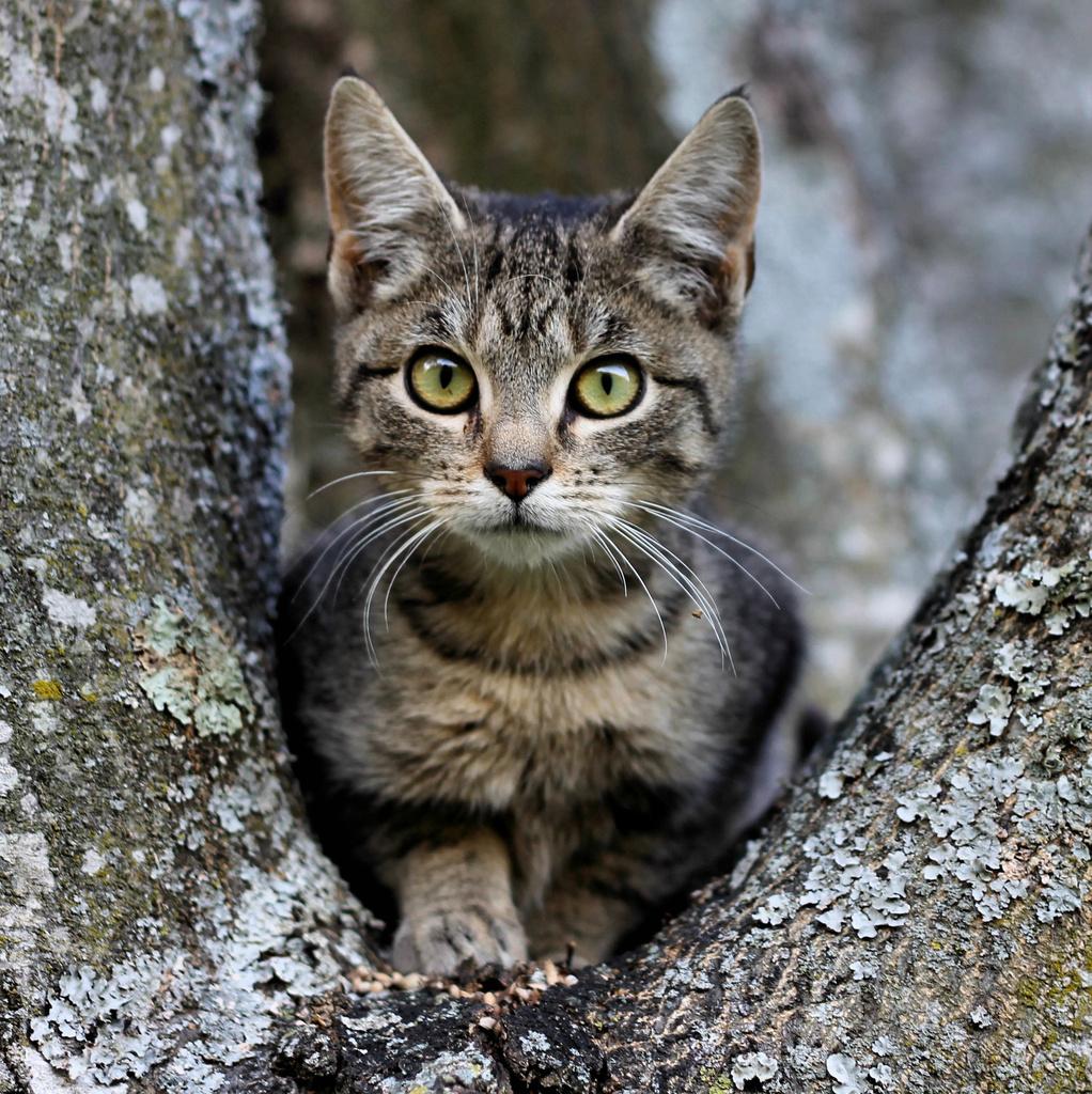 Big tree, little cat by cjwhite