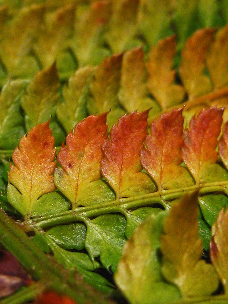 autumn fern by jantan
