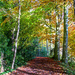 woodland walk by jantan