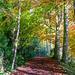woodland walk by jantan