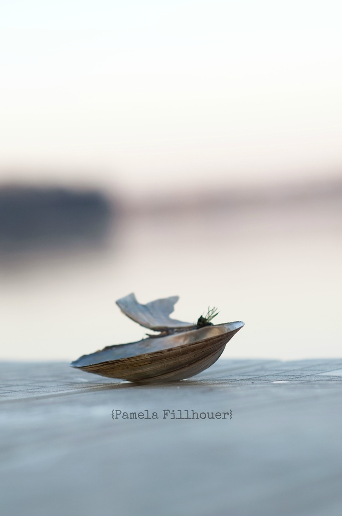 a seashell... by earthbeone