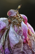 9th Nov 2012 - Pink Rose