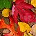 Fallen Leaves by soboy5
