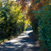 sparepenny lane by peadar