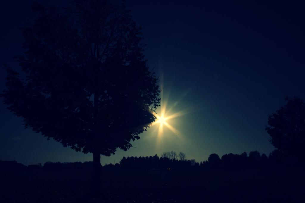 morning sun by edie