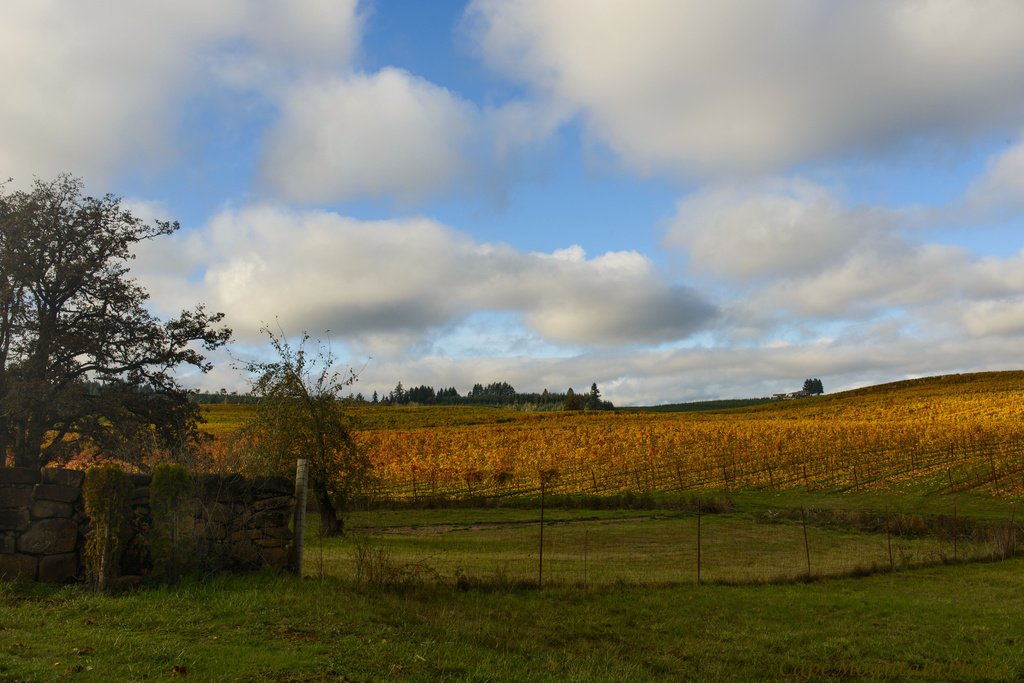 Wine Country in Its Fall Coloring by jgpittenger